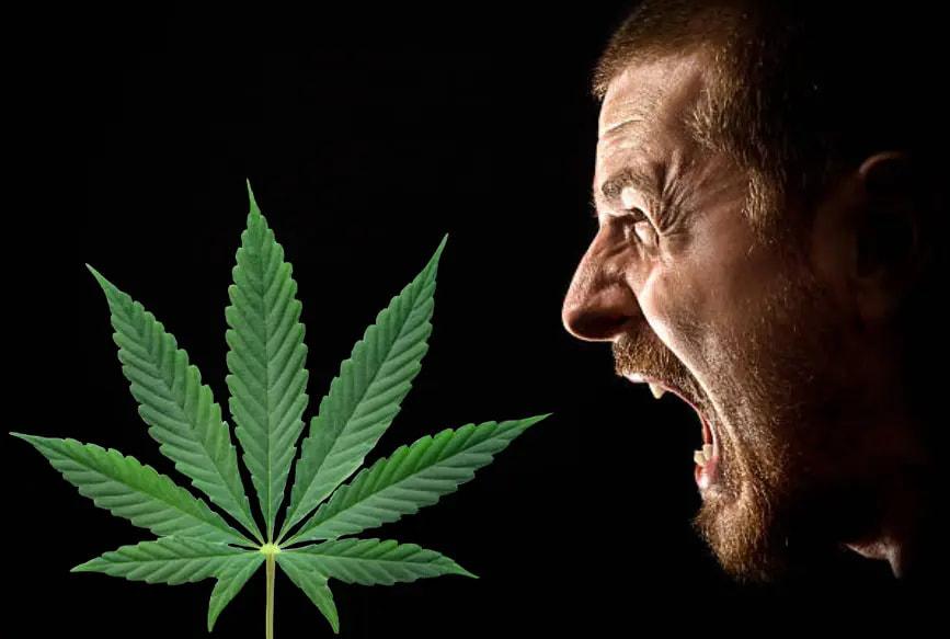cannabis y agresividad