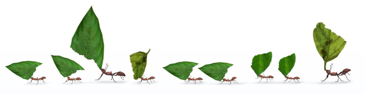 fila de hormigas con hojas