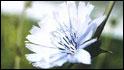 Las flores de Bach, objeto de la llamada 'Terapia de las emociones'